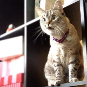 Коты инстаграма